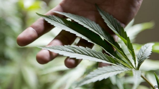 Cash-strapped Zimbabwe to make cannabis main export