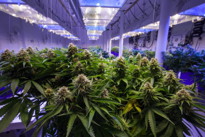 JPD Capital launches medicinal cannabis investment vehicle