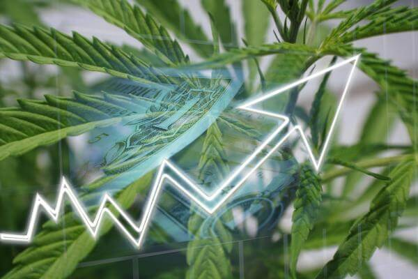 Investing in anything else but cannabis during COVID-19? Don't
