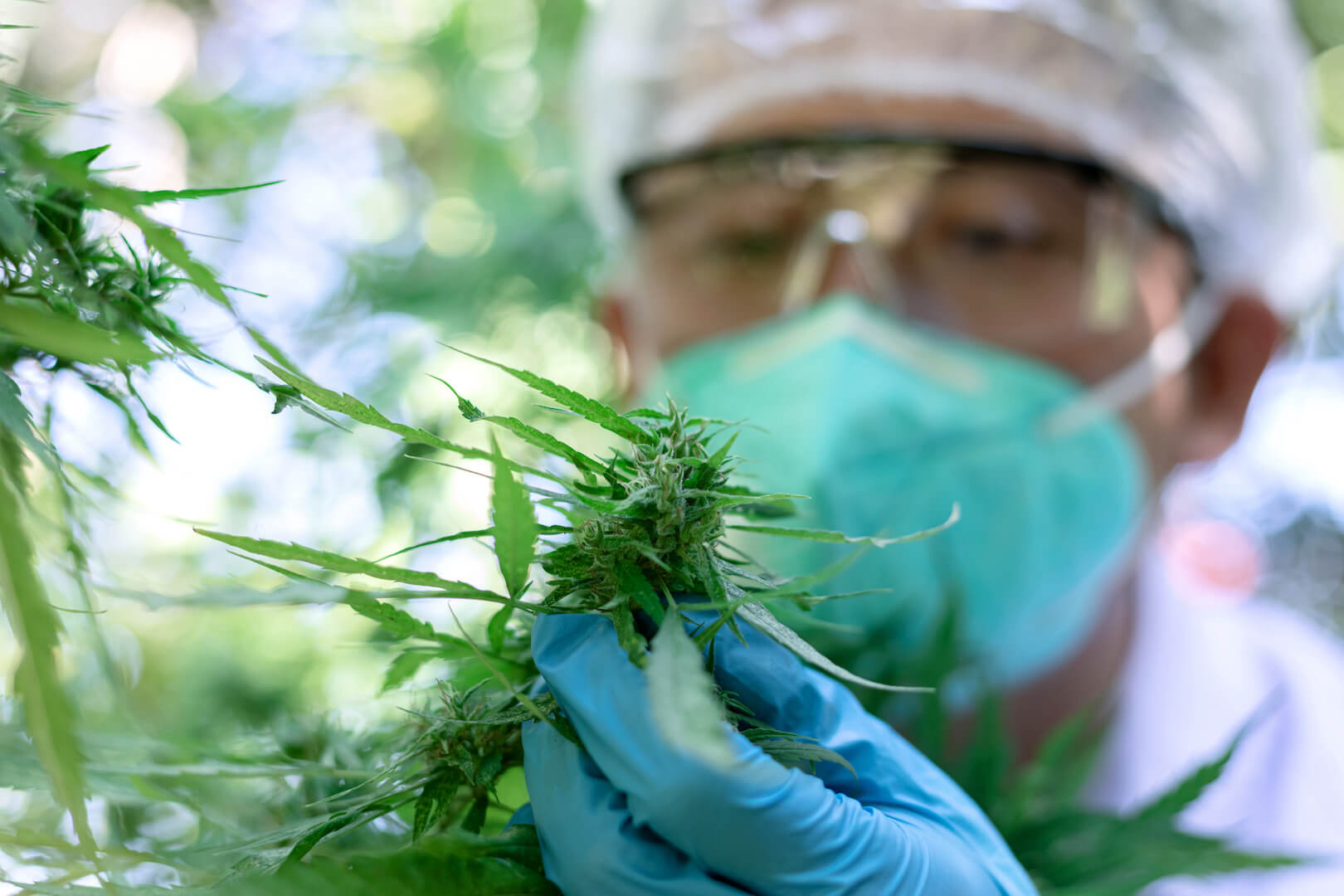 //www.eco-equity.com/wp-content/uploads/2020/11/scientist-examining-cannabis-plant.jpeg